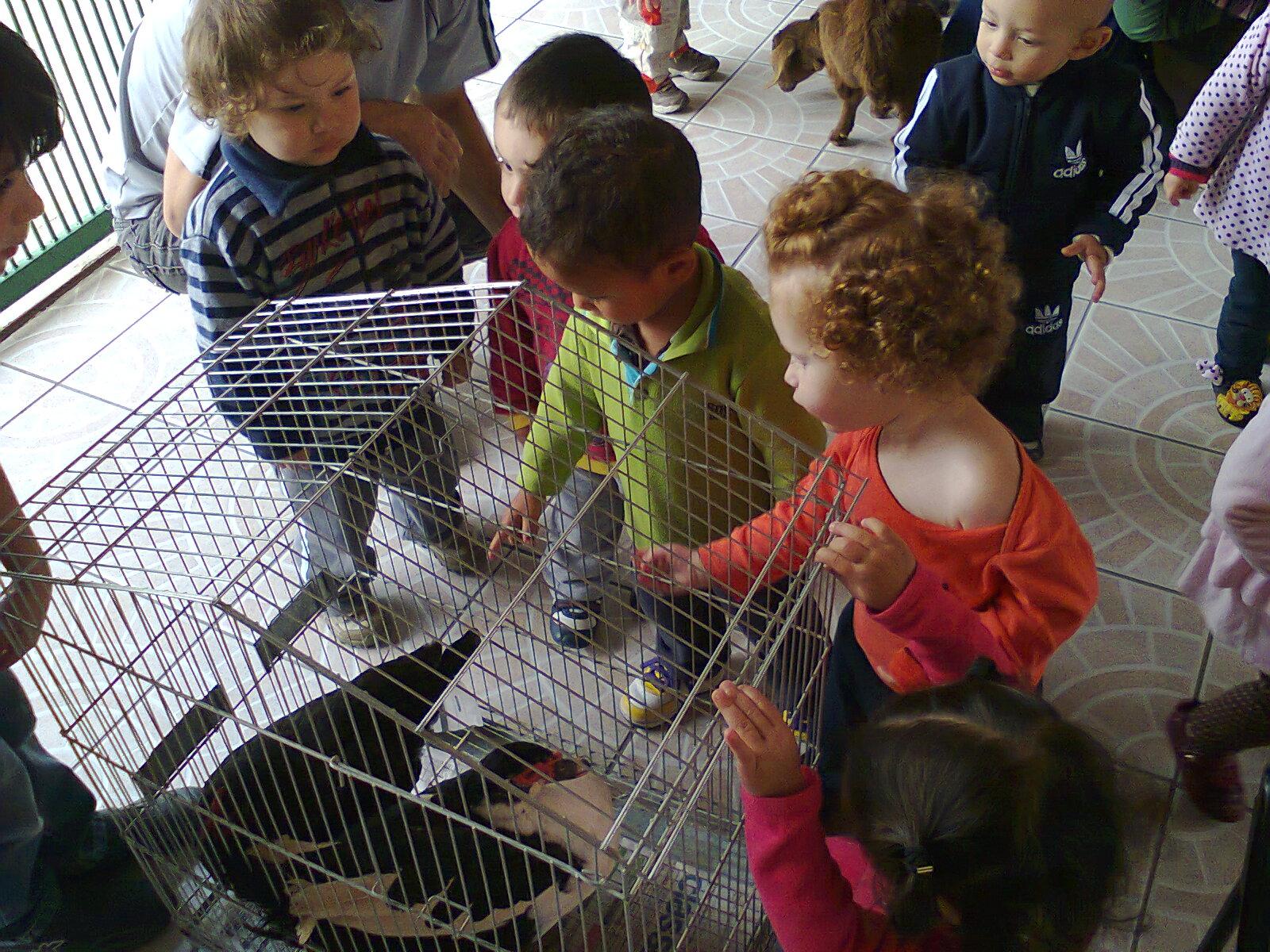foto de animal com as crianças