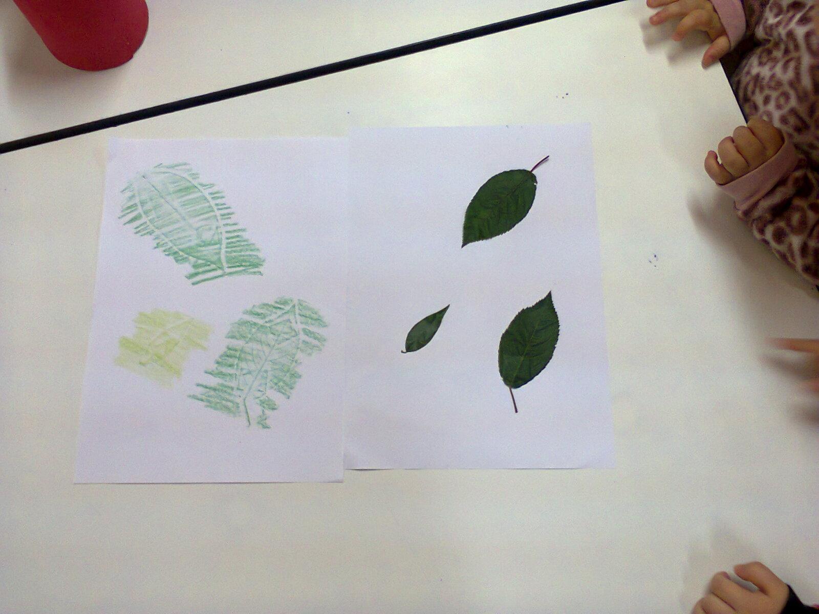 impressão das folhas