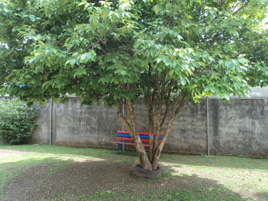 Vila Sandra/Plantas do CMEI4