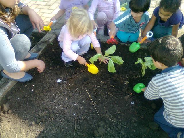 As crianças participando do replantio de couve nos