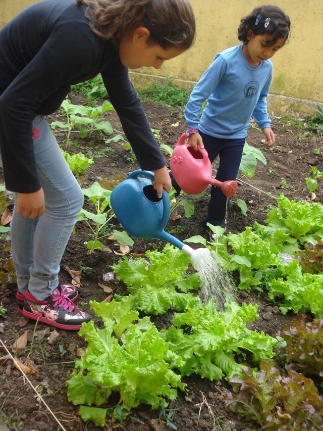"""Projeto """"Quem planta, colhe"""" com alunos da Sala de Recursos"""