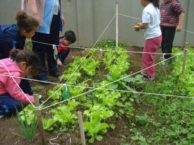 Cultivando a horta na escola!
