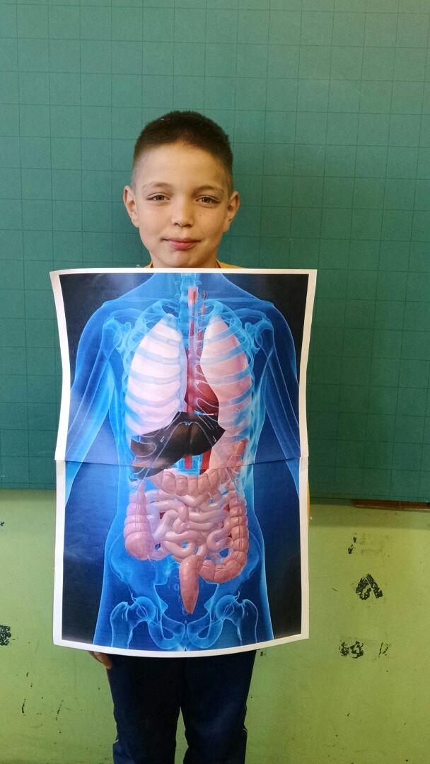Aparelho Digestório - Imagens 3D