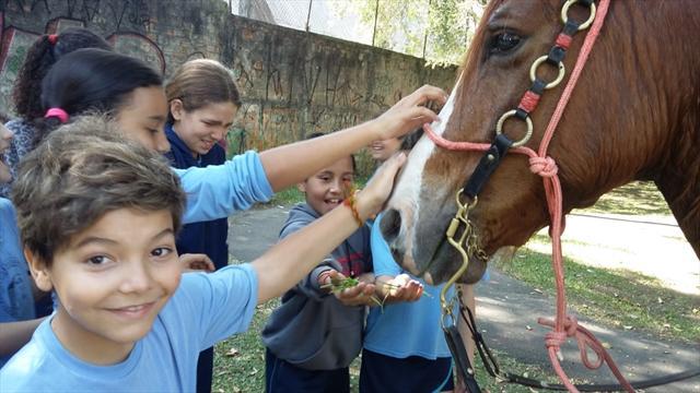 Sequência didática sobre os cavalos com os alunos do 4º ano A