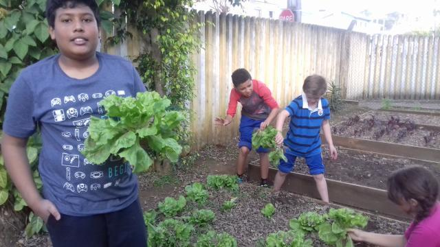 Produtos colhidos na horta da escola.
