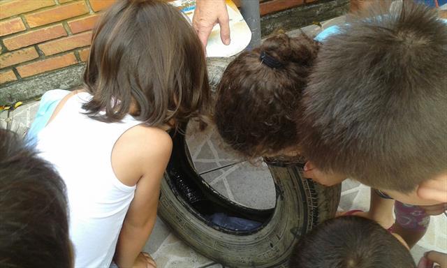 Ação em combate ao mosquito da Dengue