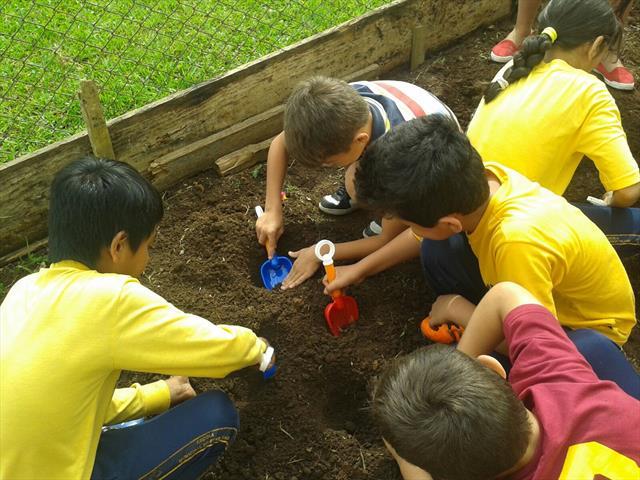 Alunos do 4º ano C plantam citronela na escola.