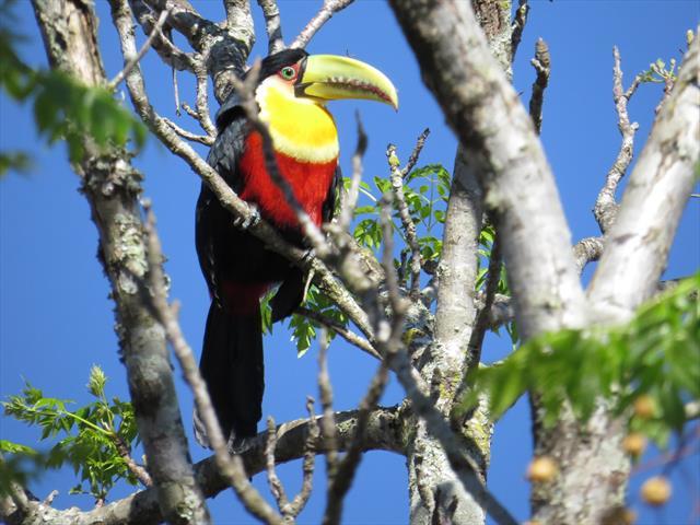 Foto do Tucano