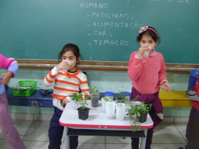 Plantas Medicinais, comestíveis (temperos) e chás
