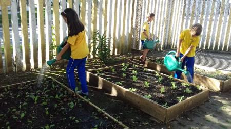 Estudantes plantam, cuidam, colhem e saboreiam pro