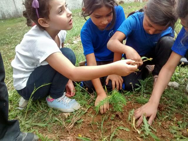 Alunos do contraturno plantam árvores