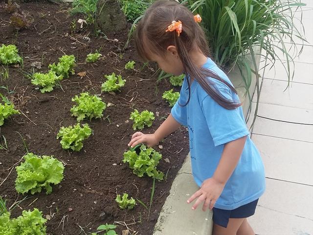 Por um mundo Sustentável - Da horta para a mesa!