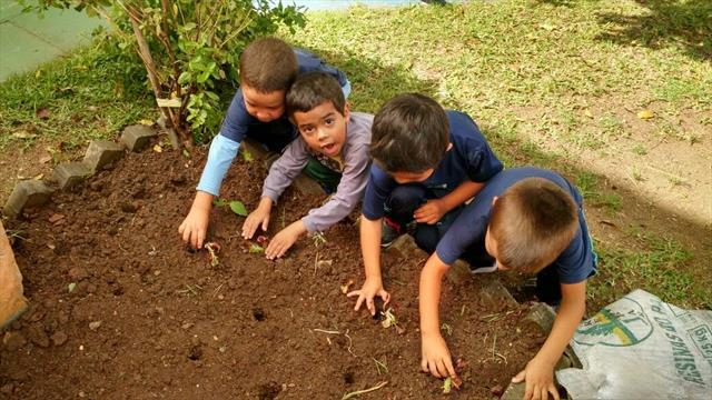 plantio da hortalicas 4