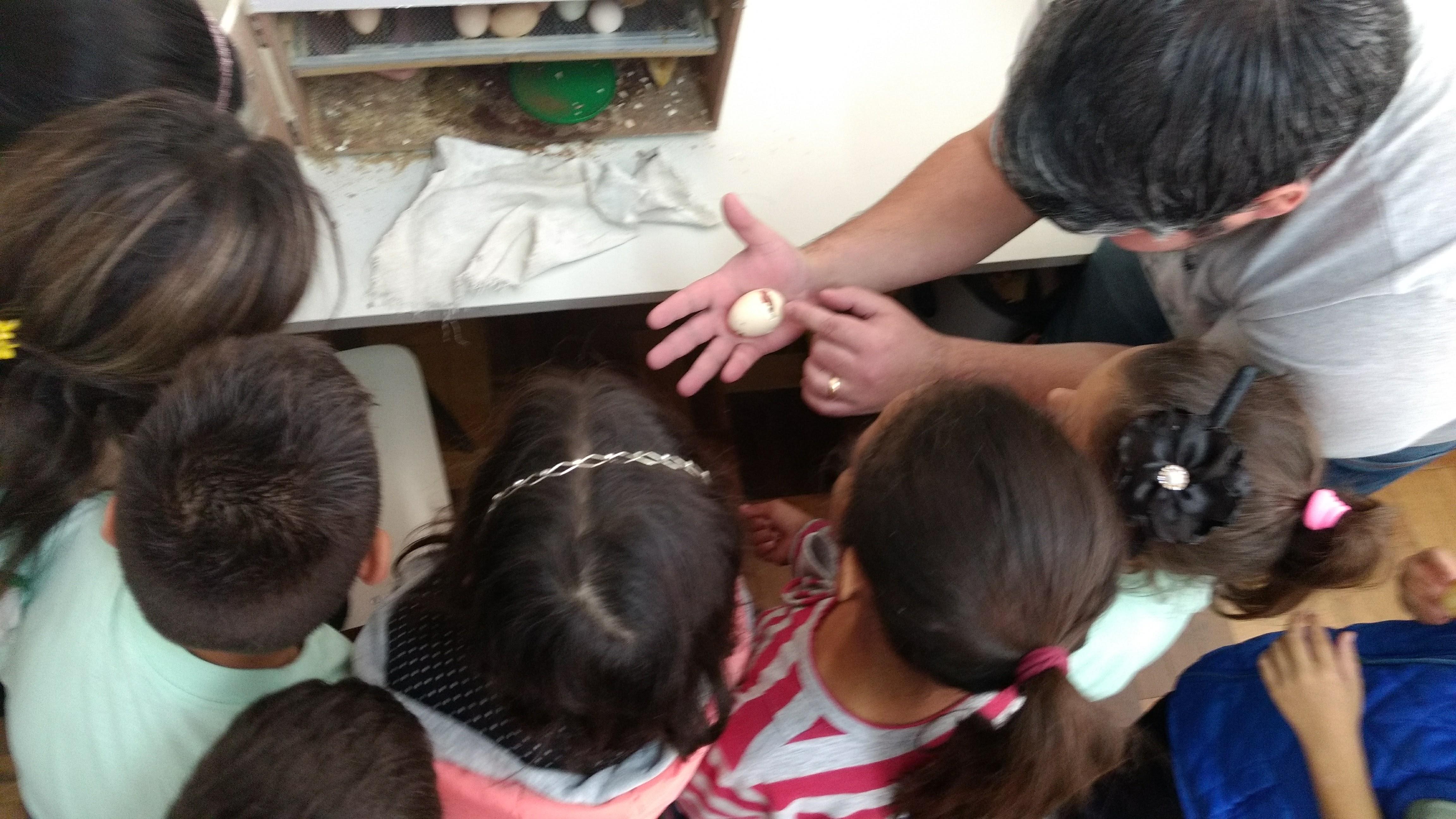 Projeto Do ovo à galinha em escola de Santa Felicidade ensina a crianças o cuidado com a vida