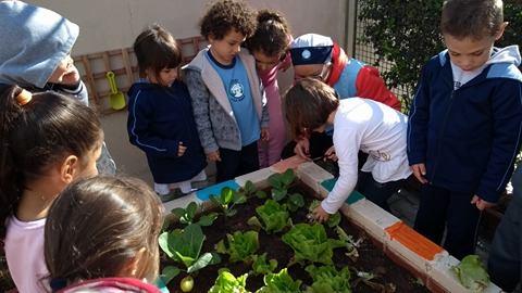 Horta no CMEI Vila Diana - incentivo a uma alimentação saudável