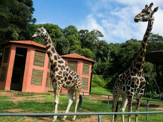 Aulas de Campo no Zoológico de Curitiba