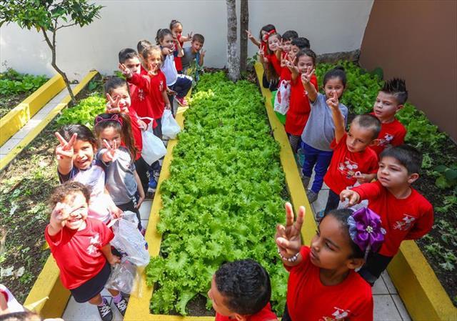 Da horta do vovô para casa: crianças colhem alimentos nutritivos