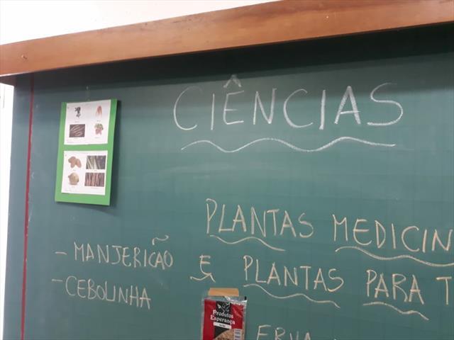 Aula de Ciências - PLANTAS