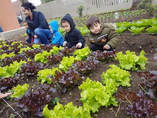 Visita à horta comunitária do Armazém da Família