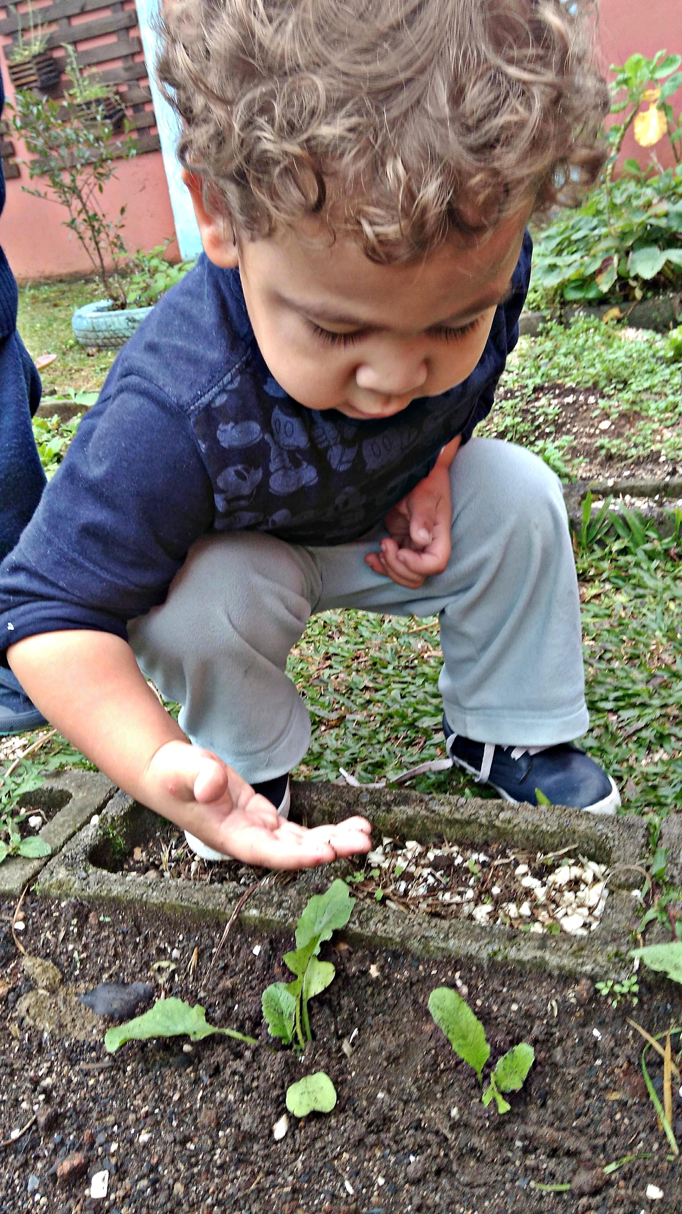 Plantando Sabores