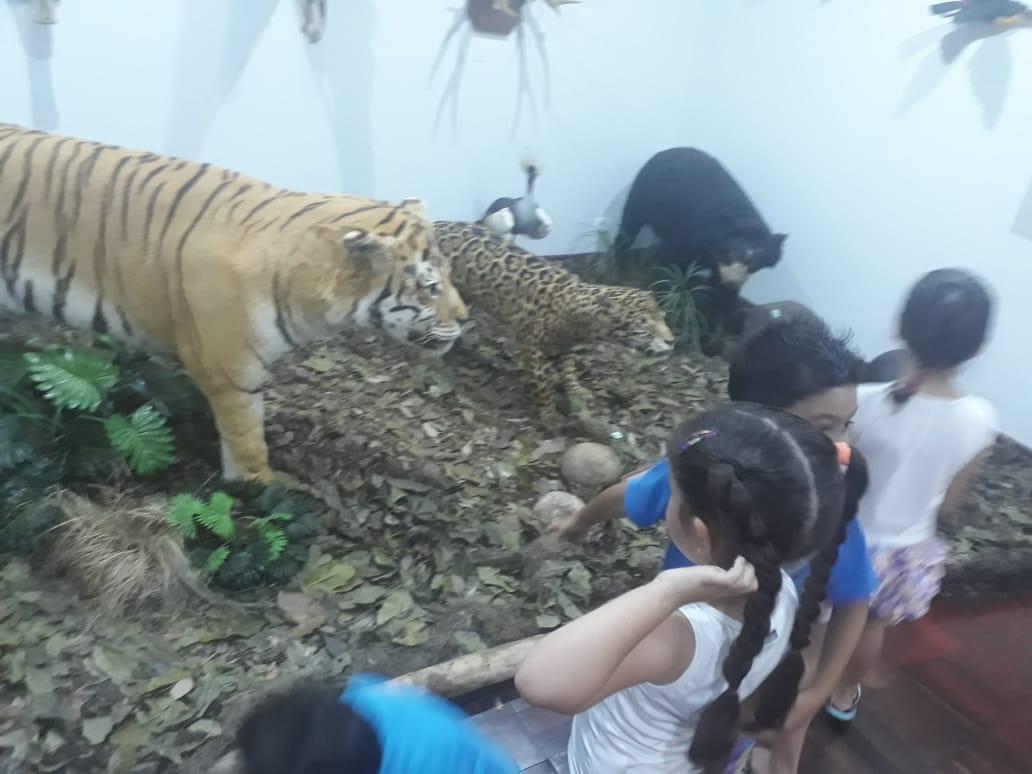 Museu em que as obras de arte são os animais.