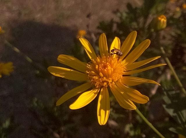 jardim de mel