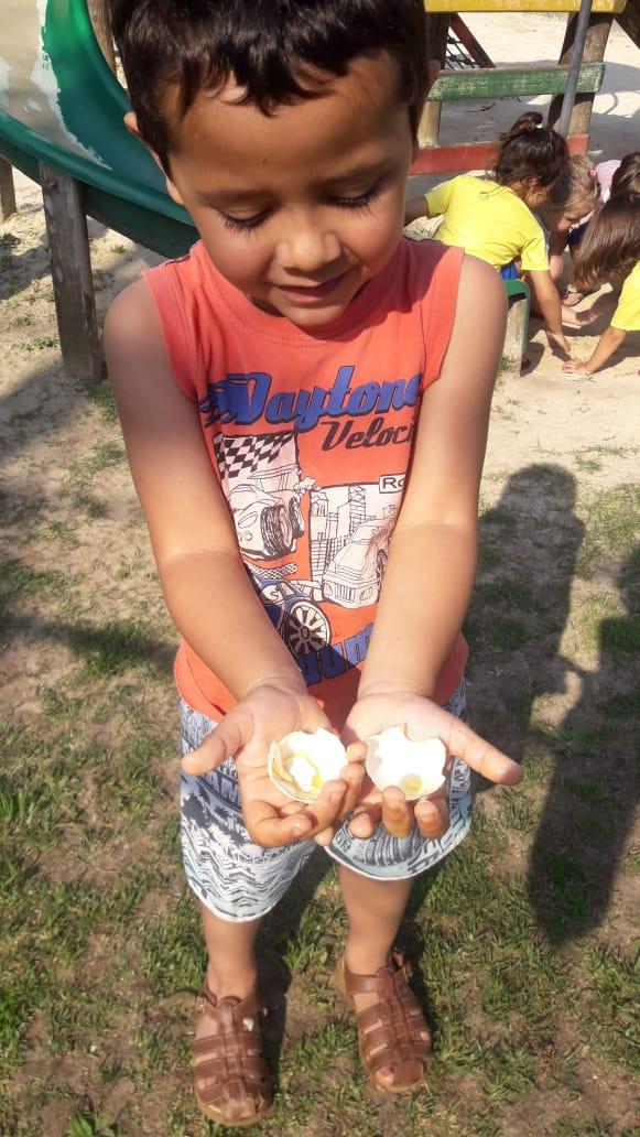Quem põe ovos?