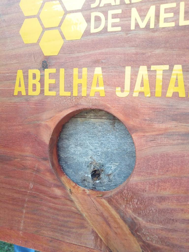 Abelhas Jataí