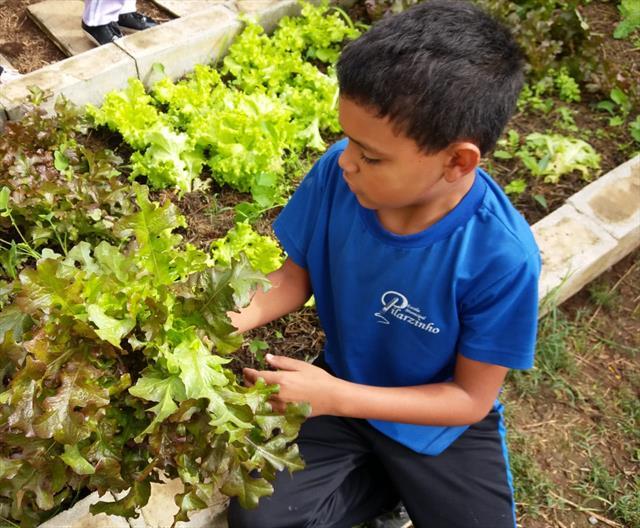 1ª colheita impulsiona alimentação saudável
