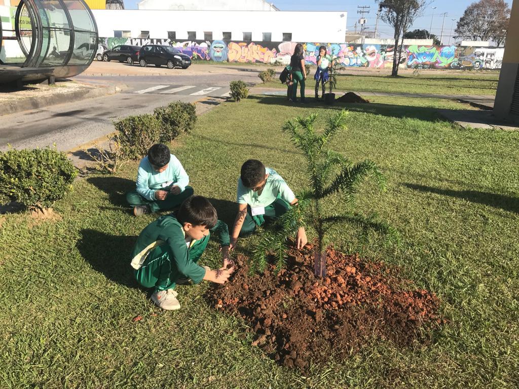 Estudantes da EM Adriano Robine realizam plantio de araucárias