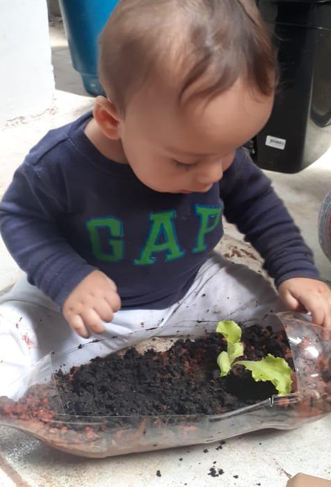 Mãos na terra, semente plantada e frutos colhidos...