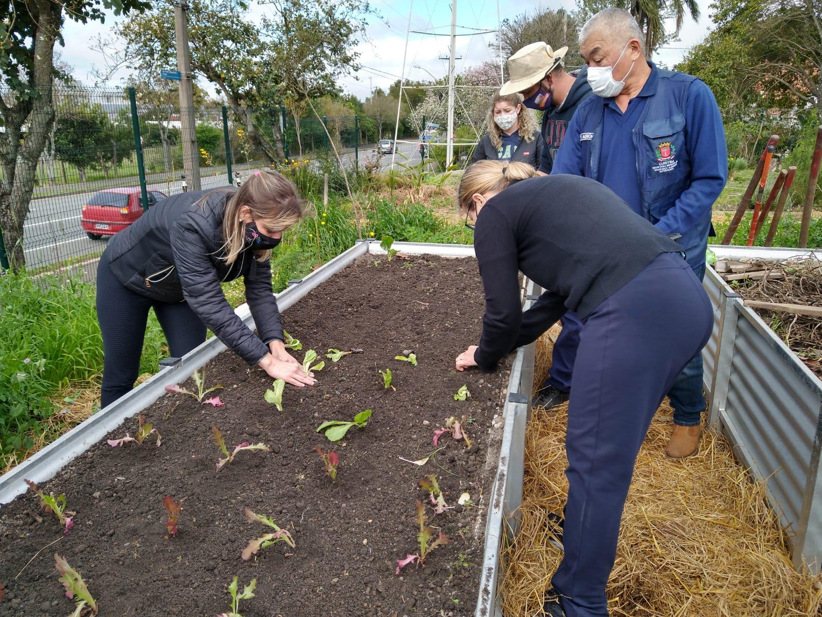 Plantando as mudas